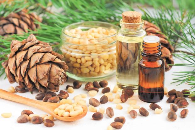 Die ätherischen Öle der Zirbe sind beliebt, auch ihre Nüsse finden Eingang in die Küche.