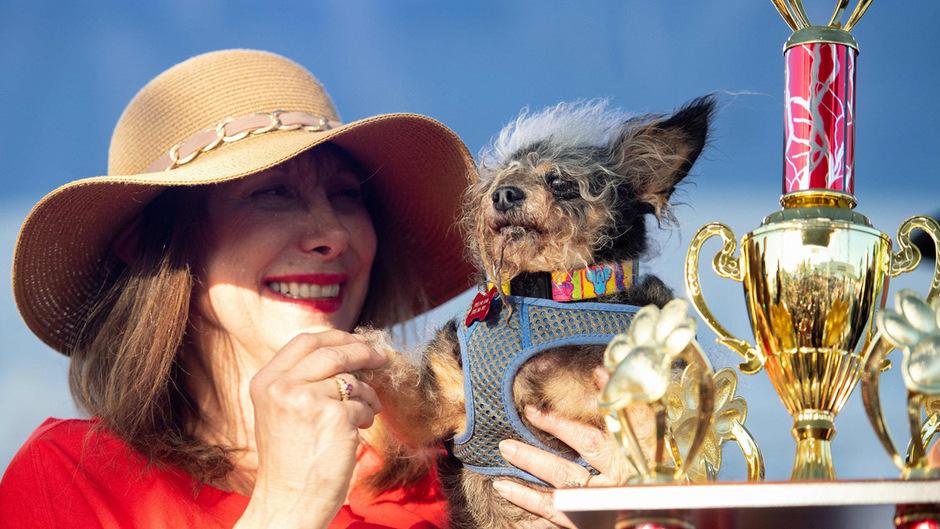 """""""Scamp the Tramp"""" siegte beim Wettstreit um den Titel """"Hässlichster Hund der Welt""""."""