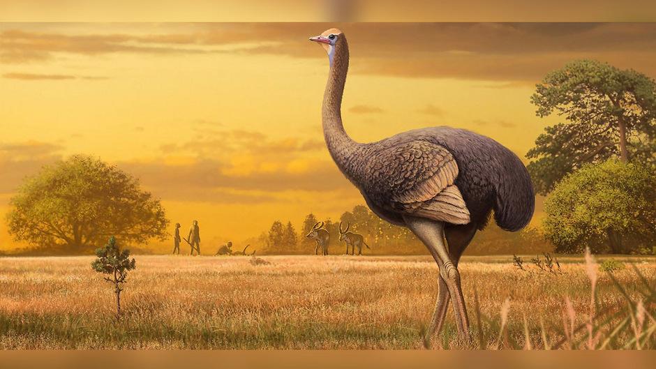 Ob es sich bei dem Tier um einen Strauß oder einen anderen Vogel handelt, müssen die Wissenschafter noch klären.