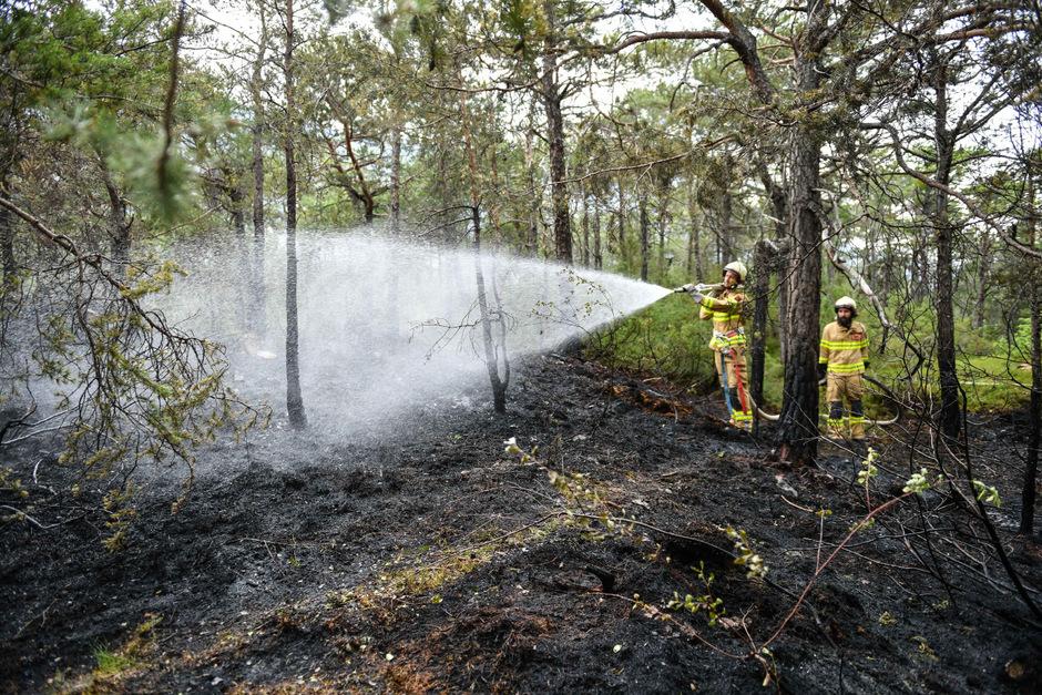 Der Waldbrand in Ötztal Bahnhof konnte rasch gelöscht werden.