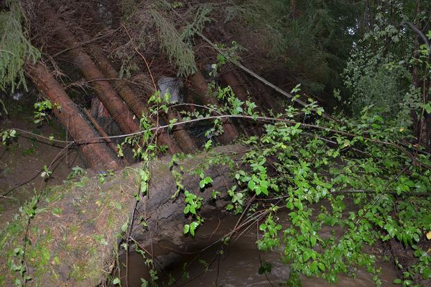 In Sieghartsles stürzten elf Bäume auf ein Haus. Eine komplette Pflanzenreihe wurde durch den vorbeifließenden Wieningsbach unterspült.
