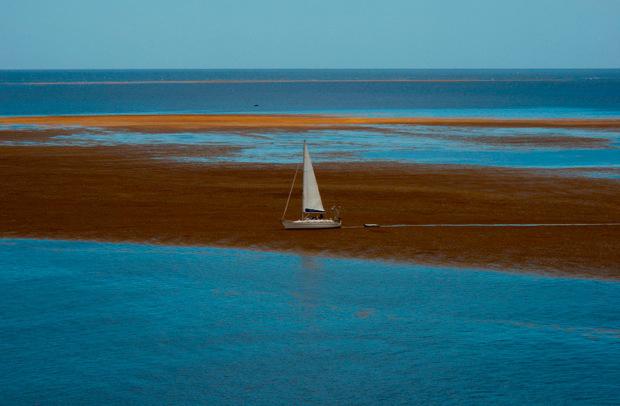 Die Wasserpflanzen sammeln sich vor der Küste wie ein schwimmender Teppich, der das Licht und den Sauerstoff wegnimmt und dadurch die Korallen und das Seegras bedroht.