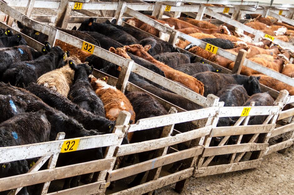 Die Südamerikaner setzten eine stärkere Öffnung des europäischen Marktes für ihre landwirtschaftlichen Produkte durch, insbesondere Rindfleisch.