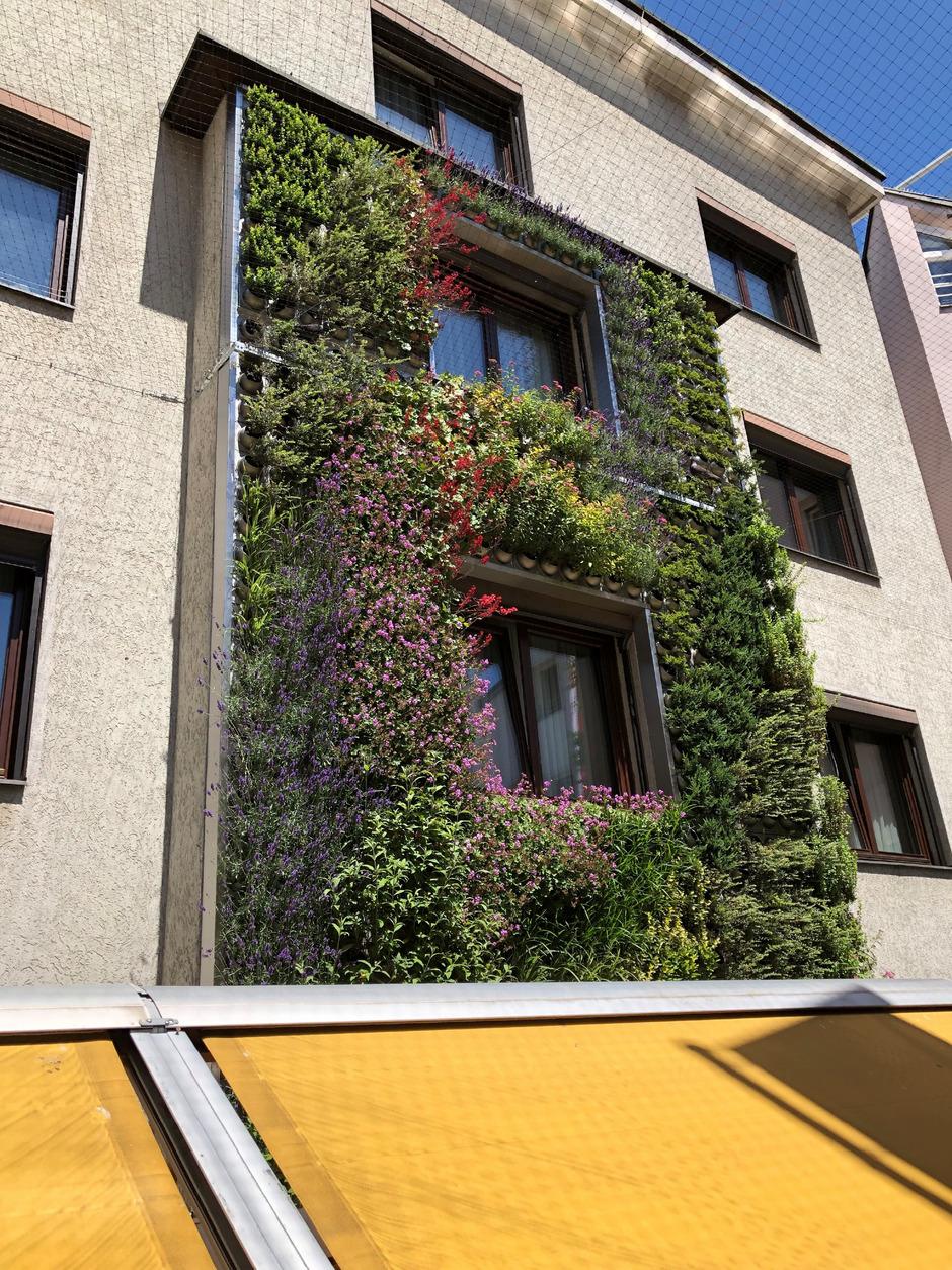 """Im Innenhof des Hotels """"Das Innsbruck"""" wachsen insgesamt 2800 Pflanzen in der Senkrechten. Sie sollen kühlen und Schadstoffe binden."""
