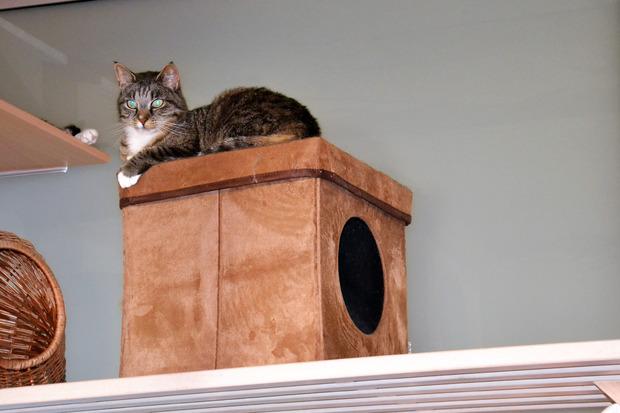 Für alte Katzen werden Futter-Paten gesucht.