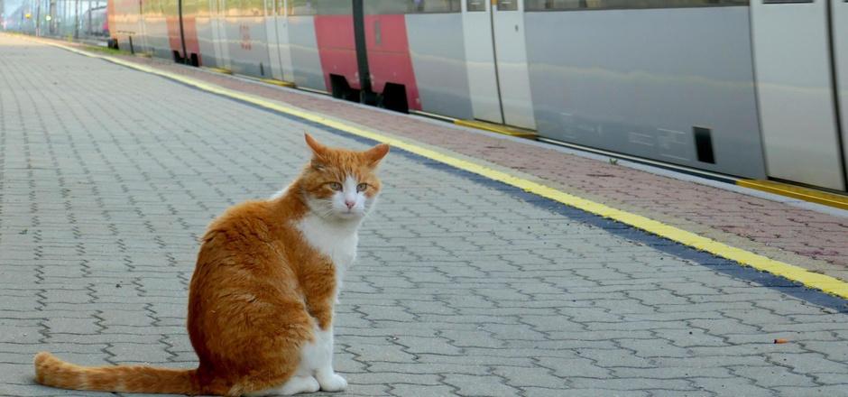"""Kater Attila ist unter Bahnfahrenden in Kundl bekannt. Seit zehn Jahren """"wartet"""" er auf die Züge am Bahngleis."""