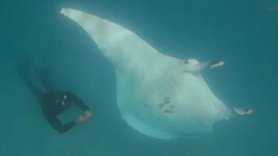 Nachdem der Taucher alle Angelhaken entfernt hatte, verschwand der Rochen den Filmaufnahmen zufolge wieder in den Weiten des Meeres vor Westaustralien.