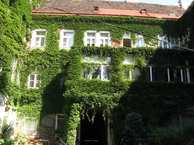 Begrünte Fassaden senken die Temperatur gefühlt um zehn Grad. In Innsbruck wird auch wegen des Lärmschutzes über grüne Fassaden diskutiert.