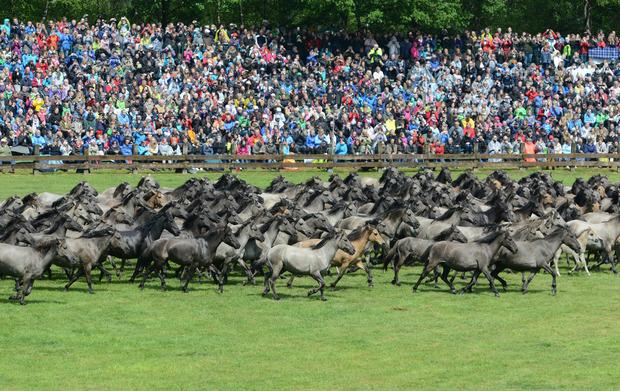 Im Mai kommen 10.000 Besucher zu einem Schaureiten und Kutschenparaden.