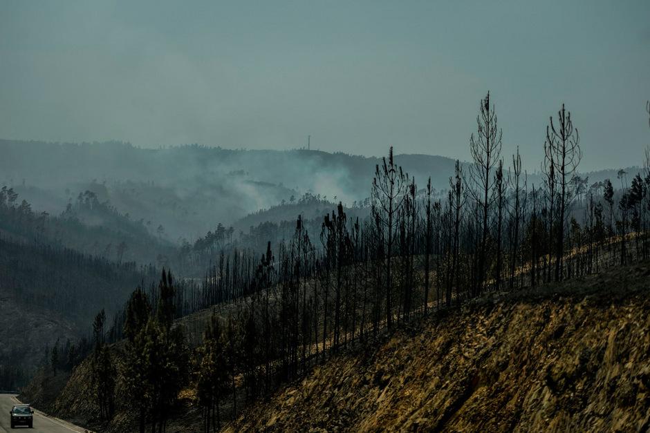 Verbrannte Erde: Die Bergregion im Zentrum Portugals wird regelmäßig von Waldbränden heimgesucht.