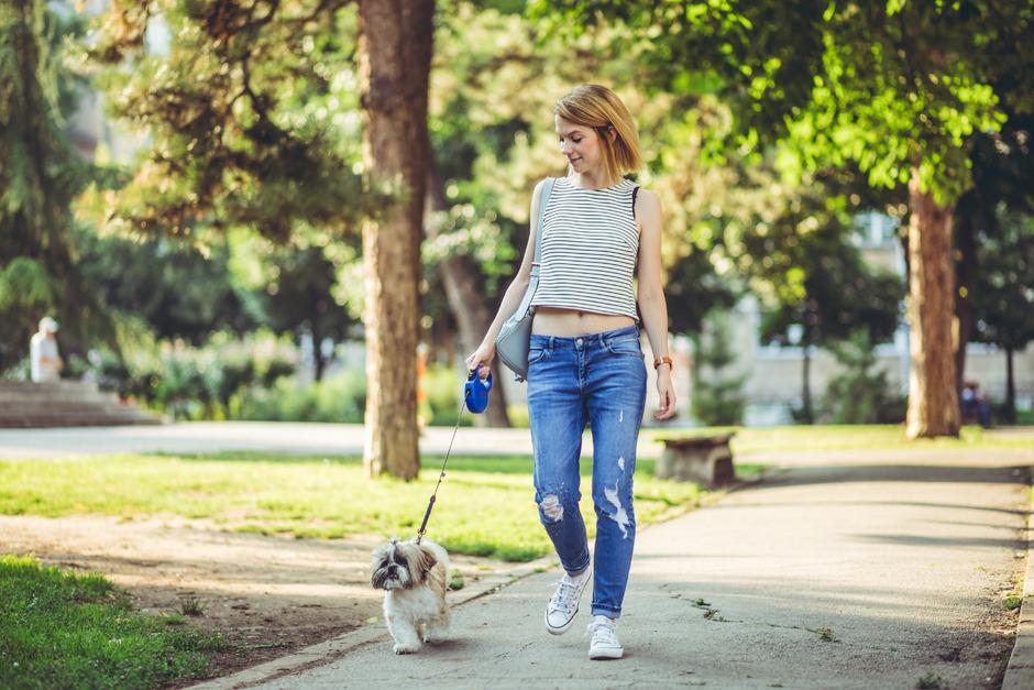 Die Novelle des Landespolizeigesetzes sieht vor, dass Hunde im gesamten Ortsgebiet aller 279 Tiroler Gemeinden künftig an die Leine müssen.