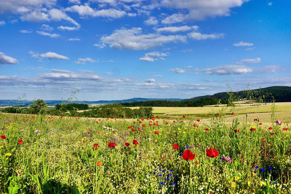 Die Landnutzung durch die Landwirtschaft ist die Hauptursache für den Rückgang der biologischen Artenvielfalt.