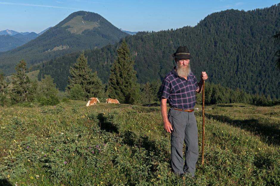 Ausschau nach der Herde: Hans Taxauer betreut am Erlerberg 27 Junghengste.