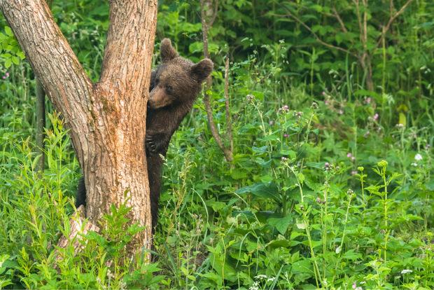 Bären kommen in dem 29.000 Hektar großen Nationalpark ebenfalls vor.