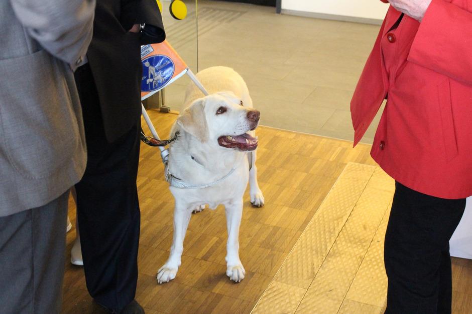 Blindenführhunde müssen im Taxi hingegen auf alle Fälle mitgenommen werden – wobei es auch hier schon Probleme gab.