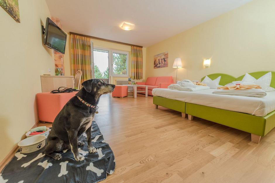 Wer einen vierbeinigen Gefährten hat, will auch mit ihm verreisen: Hundefreundliche Hotels liegen im Trend.