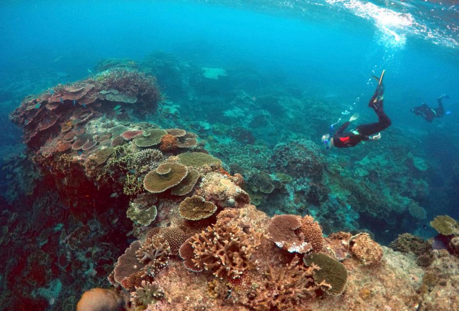 Die Korallen im Great Barrier Reef waren in den Jahr 2016 und 2017 von einer gigantischen Bleiche betroffen.
