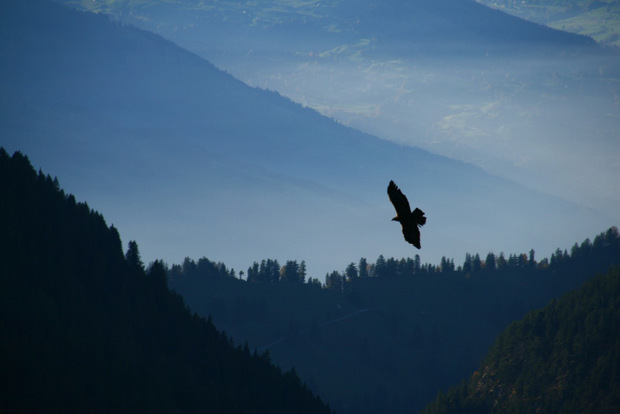 Asul in der Luft. Doch pfeift Vögeli, kehrt sie zurück.