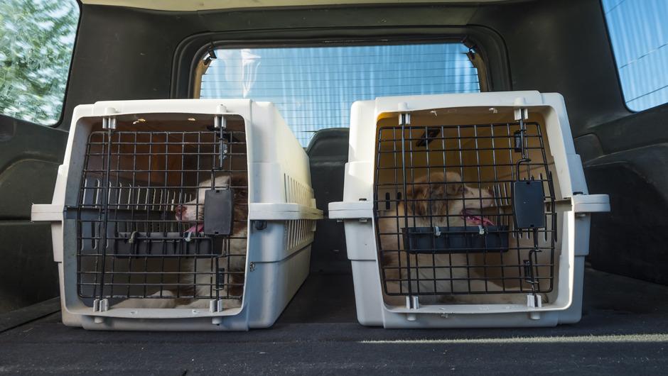 """Die wenigsten Kunden hätten Transportboxen für ihren Hund mit dabei, erklärt Taxifahrer Veysel Dirmik. Laut Innung können die meisten Hunde aber auch im Fußraum """"gefahrlos transportiert"""" werden."""