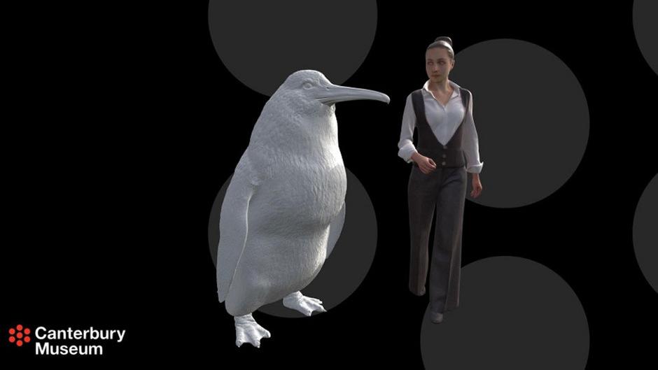 3D-Modell des Riesenpinguins: Die in Neuseeland gefundenen Knochen gehören zu einer bisher unbekannten Art.