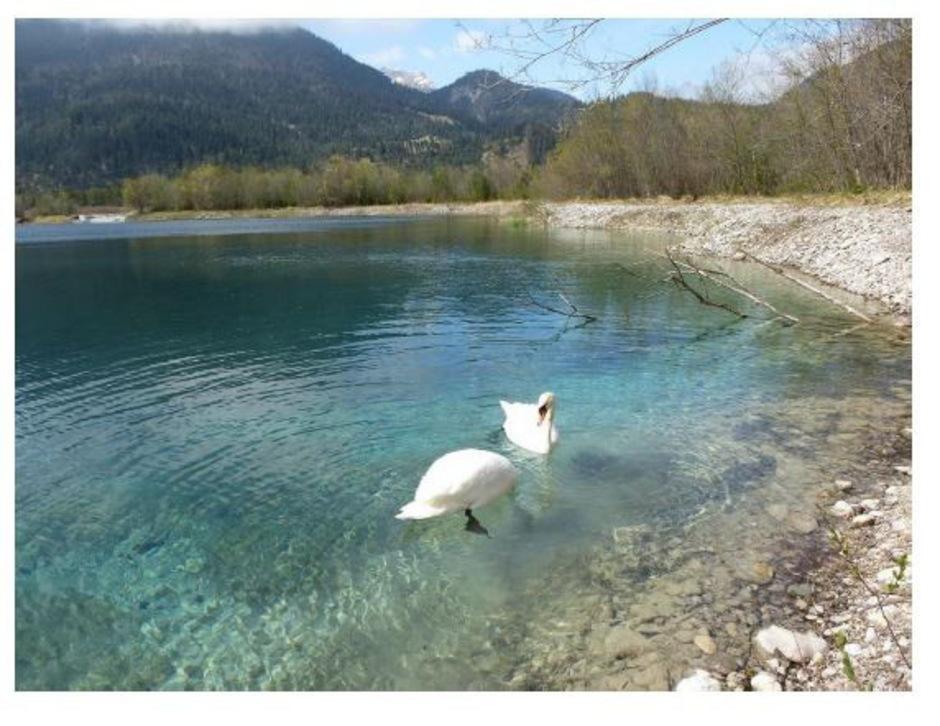 Der Forchacher Baggersee muss der Lechrenaturierung weichen.
