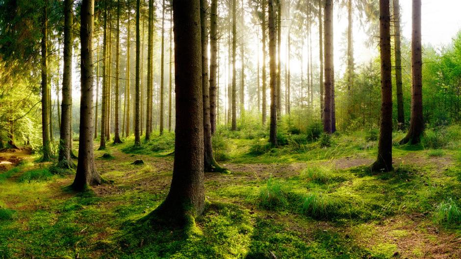 In Zeiten des Klimawandels wird der Schutzwald in Gemeinden zum großen Thema: Trockenheit und Hitze gefährden vor allem Fichtenbestände. Es muss mehr auf Mischwald gesetzt werden.