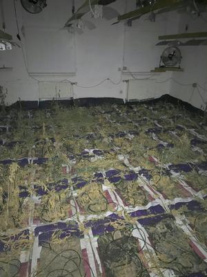 Ein 56-Jähriger soll mit zwei 52 und 55 Jahre alten Pensionisten Cannabisblüten verkauft haben, nachdem man einen Teil davon vorher anderen Cannabis-Produzenten gestohlen hatte.