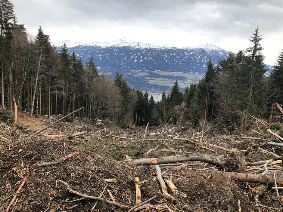 Schneeschäden aufgenommen am 10. März 2019 in  Richtung Arzler Alm.