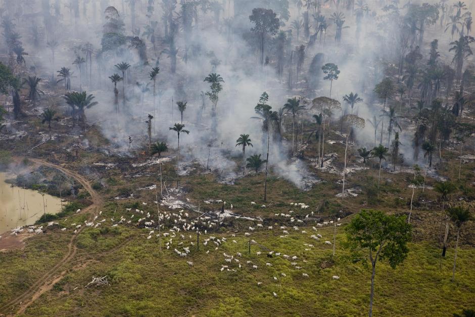 Das Verschwinden ganzer Wälder im Amazonasgebiet hat fatale Folgen für das Klima.