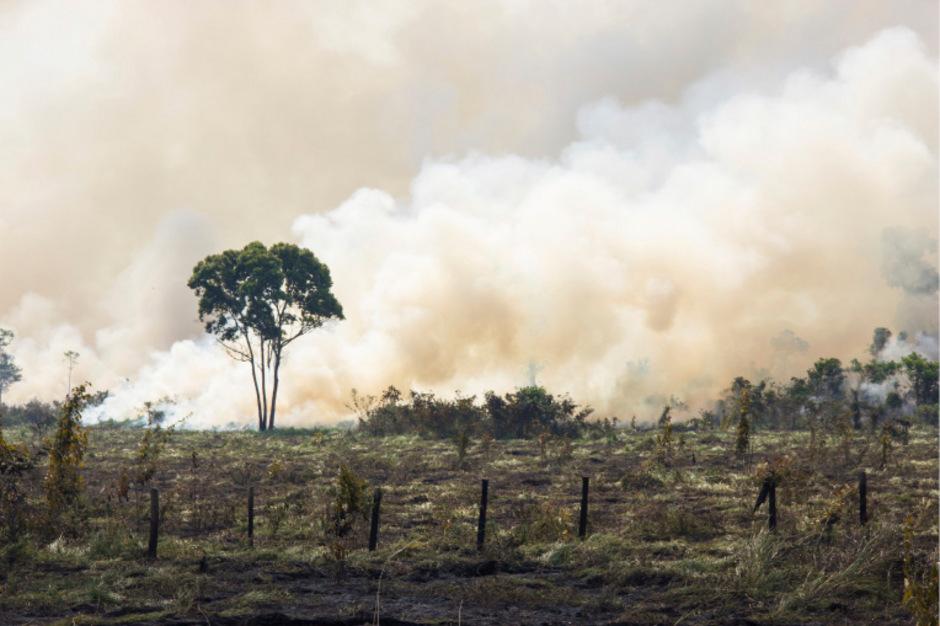 Tausende Hektar Regenwald sind durch die viele  Brände der letzten Wochen  vernichtet worden. Immer häufiger sind daran auch illegale Brandrodungen schuld.