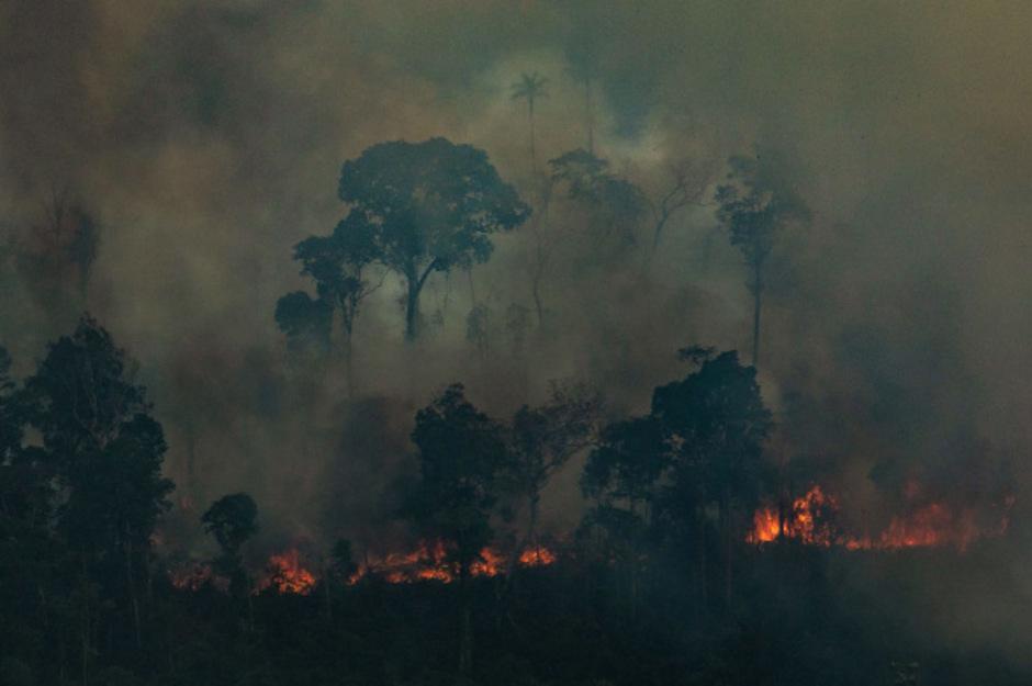 Im Amazonasgebiet wurden 79.000 Brände registriert.