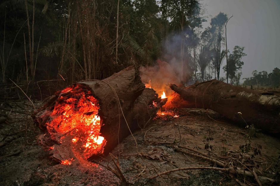 Der brasilianische Bundesstaat Rondonia ist mit am schwersten betroffen von den verheerenden Bränden im Anazonas-Gebiet.