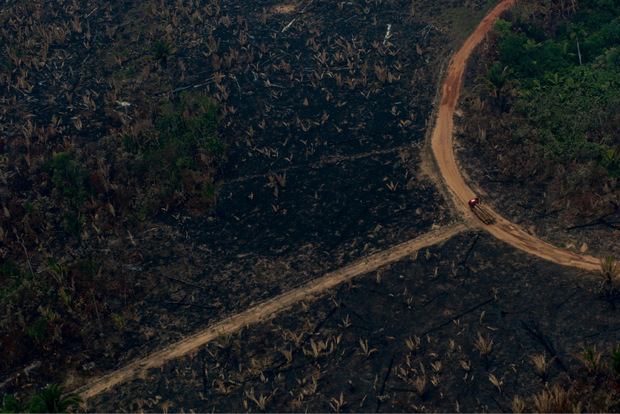 Mehr als 82.000 Brände wüten seit Jänner im Amazonas-Gebiet.