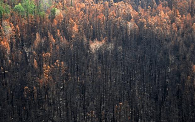 Seit Jahresbeginn wurden mehr als 13,4 Millionen Hektar Wald in Sibirien durch Brände vernichtet.