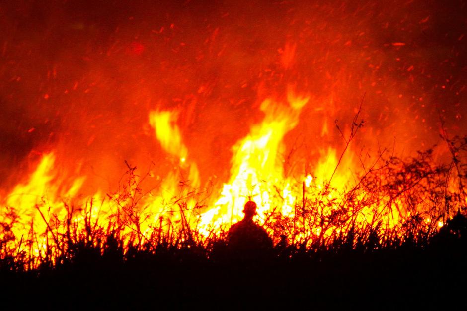 Bei Bränden seit Beginn des Jahres sind in Indonesien (hier Süd-Sumatra) bereits mehr als 410.000 Hektar Wald vernichtet worden.