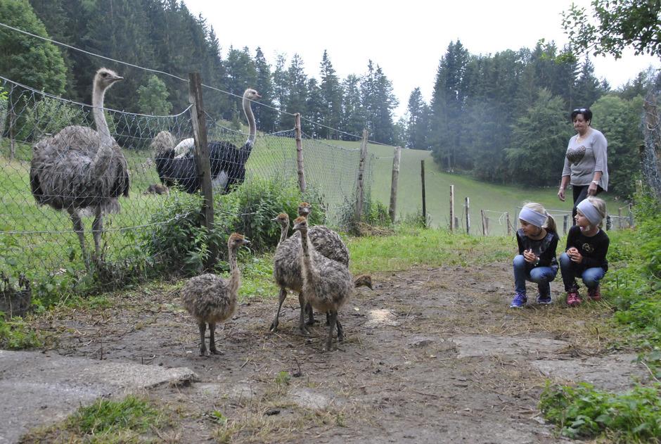 Heidi Daxauer mit den Enkeln Emma und Lena beim Straußennachwuchs im privaten Gehege.