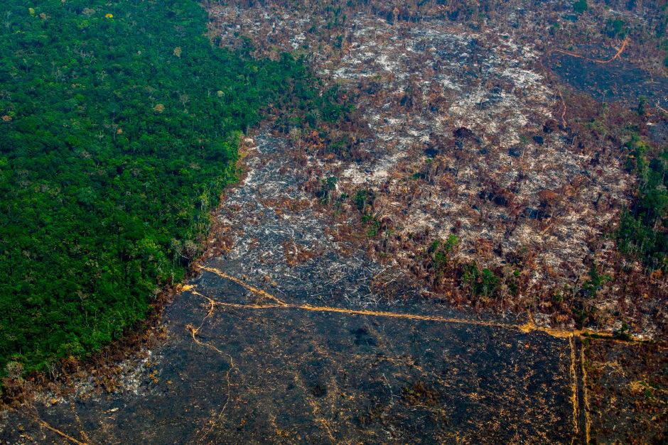 Dass der Regenwald sich wieder erholt und aussieht wie vor den Bränden, ist laut Vacik zwar prinzipiell möglich, würde aber Jahrzehnte in Anspruch nehmen.