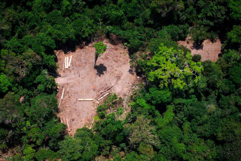 Nach Einschätzung von Umweltschützern stecken meist Farmer bereits abgeholzte Flächen in Brand, um neue Weideflächen und Ackerland für den Soja-Anbau zu schaffen.