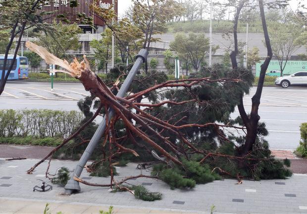 Der Sturm riss Bäume um und verursachte zahlreiche Schäden.