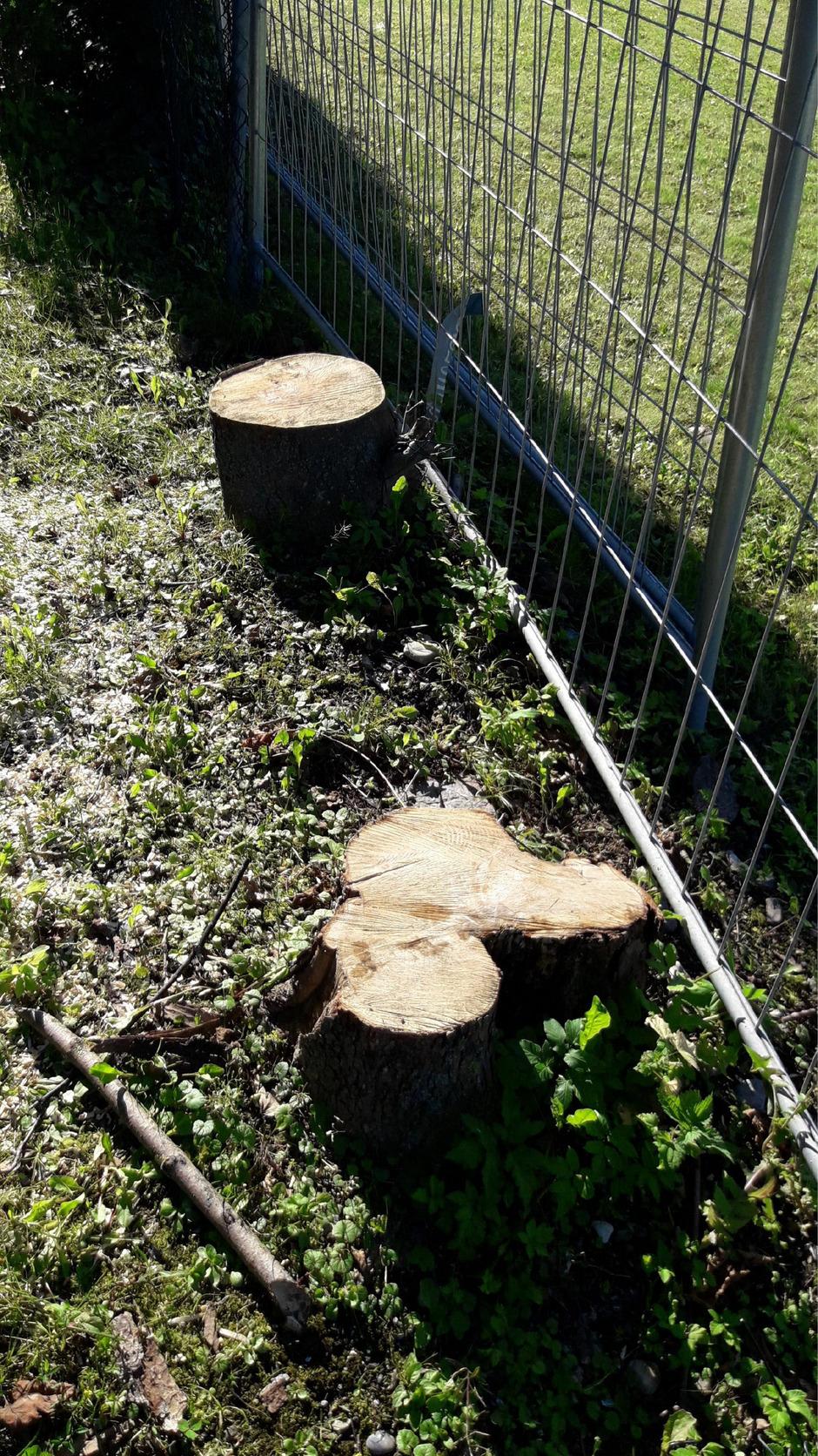 Für den neuen Radwegabschnitt mussten ca. 15 Bäume weichen.