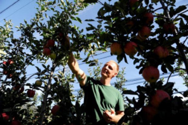 Die Apfelernte bildet ein großes Highlight für die von CUBIC und Obstbau Ligges betreuten Jugendlichen im Rahmen des Radlkino Tirol. Obstbaumeister Ligges (Bild) zeigt, wie´s geht.