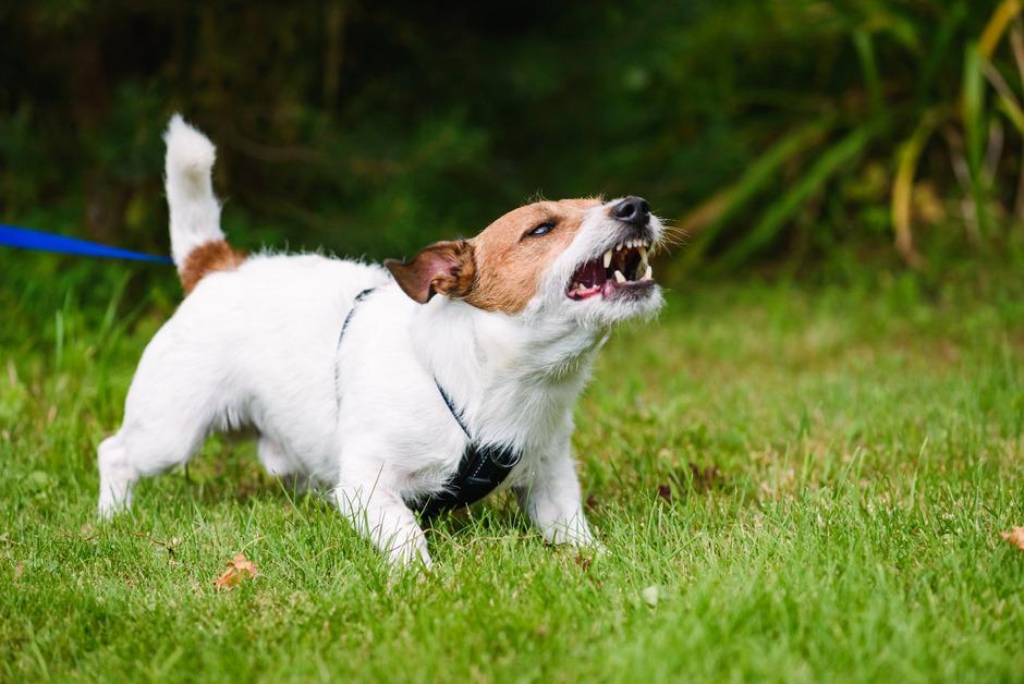 Nicht immer ist das Leben mit Hund ganz konfliktfrei.