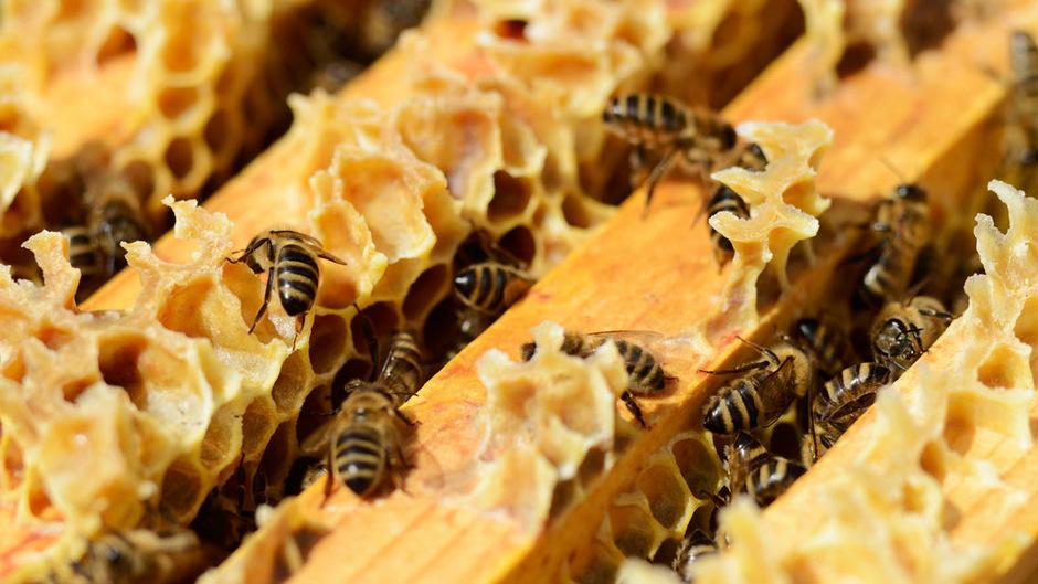 """""""Bienenpest"""" ist im Bezirk Landeck auf dem Vormarsch"""