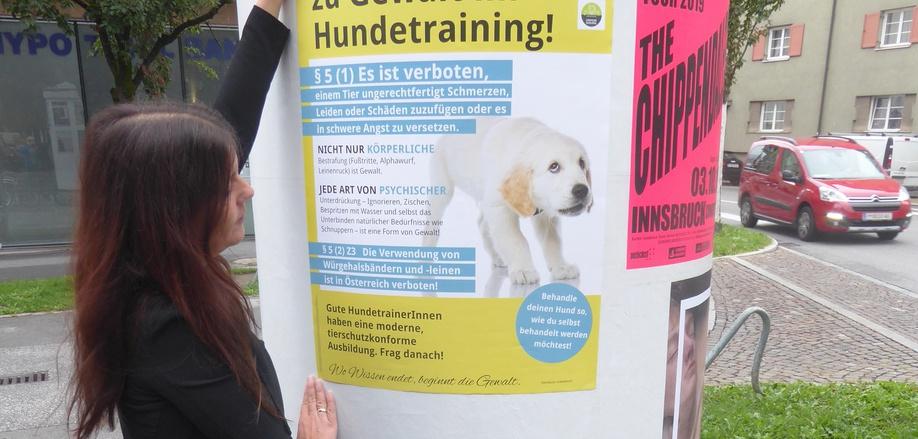 """Karin Kirchmair hängt eines der ersten Plakate ihrer Initiative """"Sag Nein zur Gewalt im Hundetraining"""" auf."""
