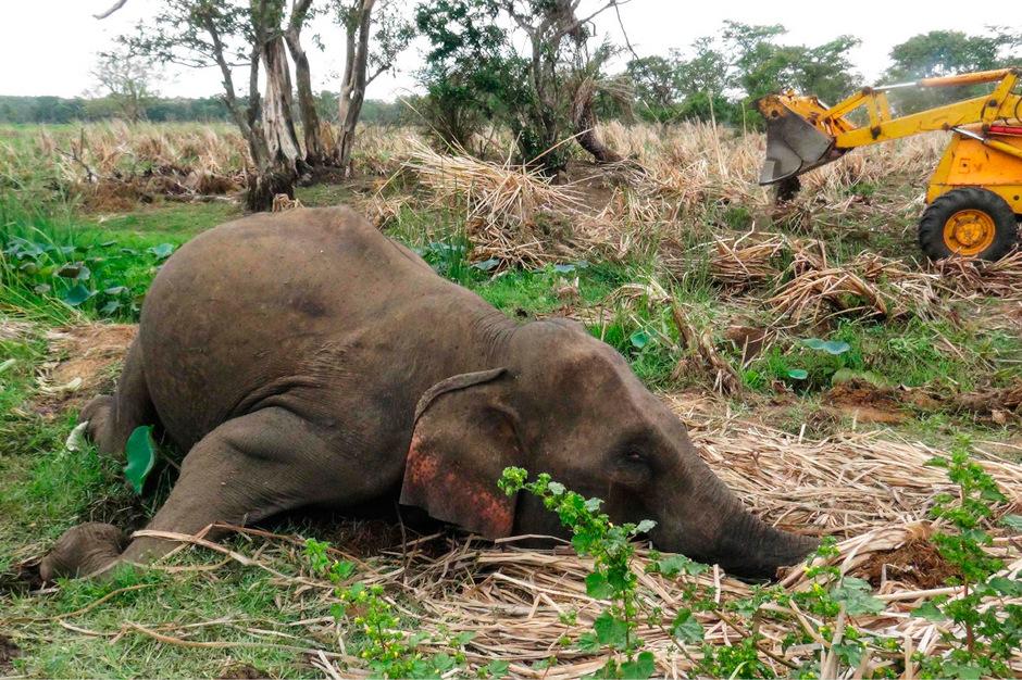 Insgesamt wurden bisher sieben tote Elefanten entdeckt.