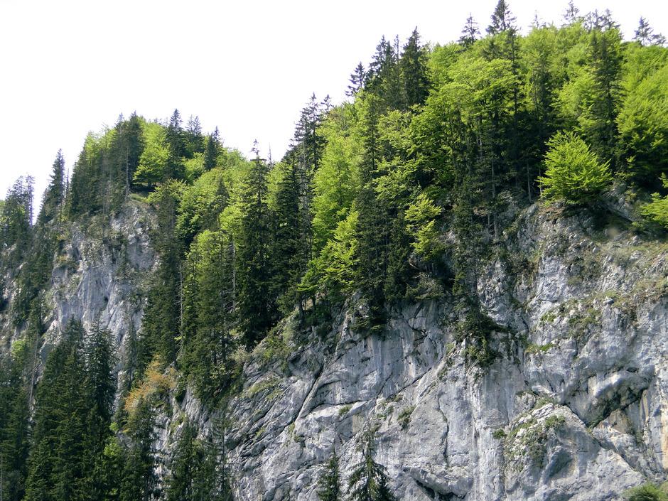 Die Niederkaiserklamm – ein Forstweg soll für die Bewirtschaftung des Schutzwaldes gebaut werden.