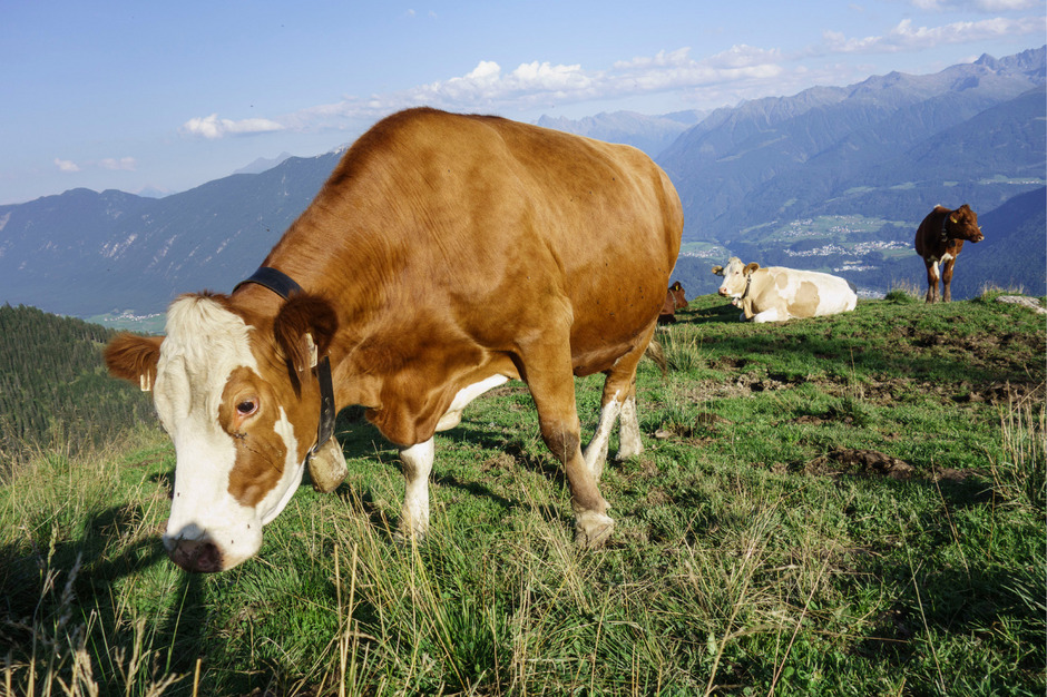 Futtermittelberechnungen der Almflächen sind erneut im Visier.