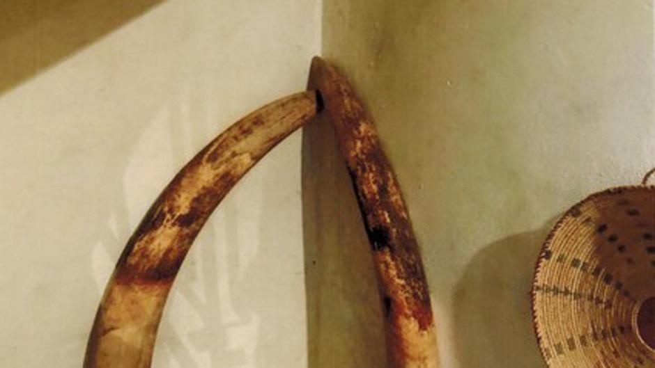 Diese Elefantenstoßzähne wurden in Telfes gestohlen.