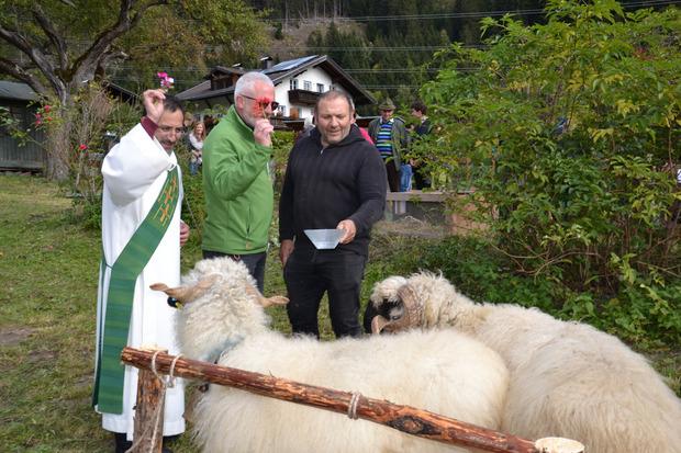 Die Waliser Schwarznasenschafe wurden von Diakon Guillermo Vargas Diaz und seinen Helfern gesegnet.