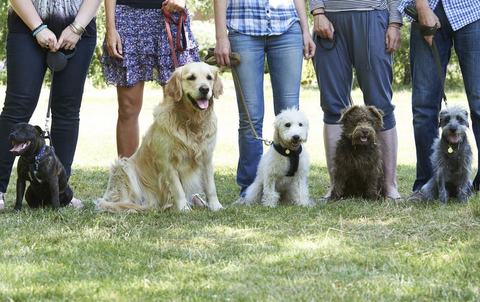Wer in St.Johann den Hundeführerschein bzw. den Hundeführschein besitzt, soll in Zukunft dafür belohnt werden.